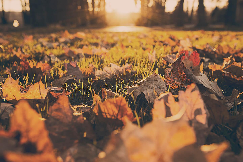 Sunrise-leaves-ground-level