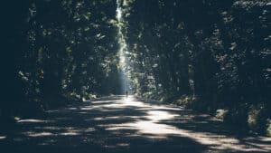 Komorebi-man-on-path